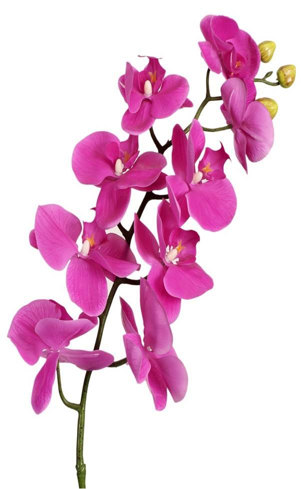 Orchid Artificial Flower (AF-046)